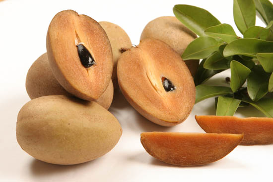 Flora and Fauna is important element in the earth: Sapodilla