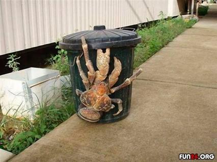crab7